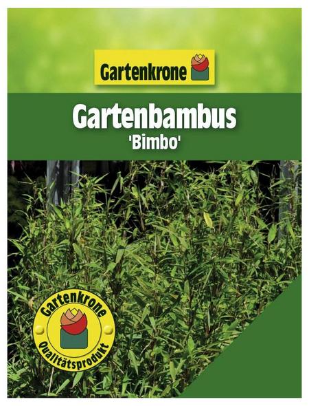 GARTENKRONE Gartenbambus murielae Fargesia »Bimbo«