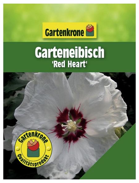 GARTENKRONE Garteneibisch, Hibiscus syriacus »Red Heart«, zweifarbig, winterhart
