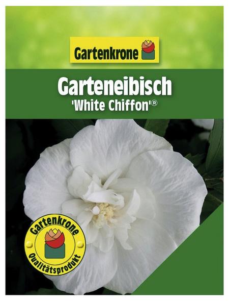 GARTENKRONE Garteneibisch, Hibiscus syriacus »White Chiffon «, weiß, winterhart