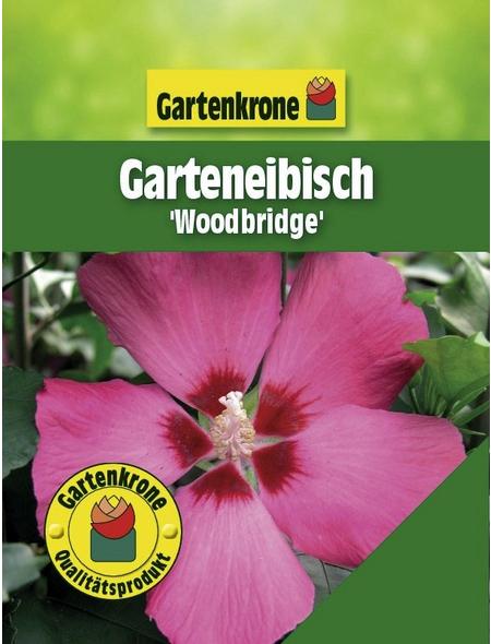 GARTENKRONE Garteneibisch, Hibiscus syriacus »Woodbridge«, rosa/pink, winterhart
