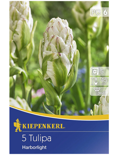 KIEPENKERL Gefüllte Tulpe Tulipa Tulipa x Hybrida »Tulipa x Hybrida«