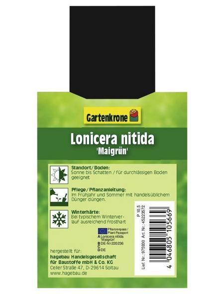 GARTENKRONE Geißblatt, Lonicera nitida »Maigrün«, creme, winterhart