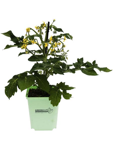 Gemüse »Naschtomate«, Gelb