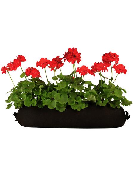 BLUMIXX Geranien Bag, Blüte: gemischt