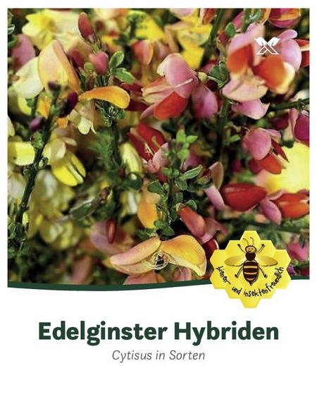 Ginster, Cytisus »in Sorten«, Blütenfarbe bunt
