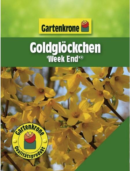 GARTENKRONE Goldglöckchen, Forsythia intermedia »Week End «, gelb, winterhart