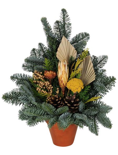 Grabtopf, Tanne, Ø 12 cm, garniert, natur