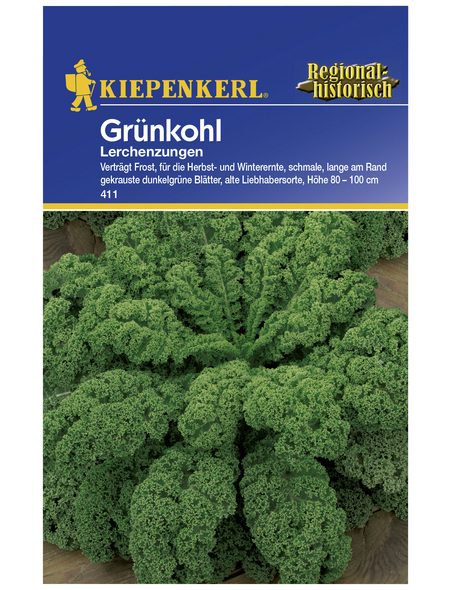 KIEPENKERL Grünkohl oleracea var. sabellica Brassica