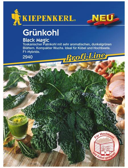 KIEPENKERL Grünkohl oleracea var. Sabellica Brassica »Black Magic«
