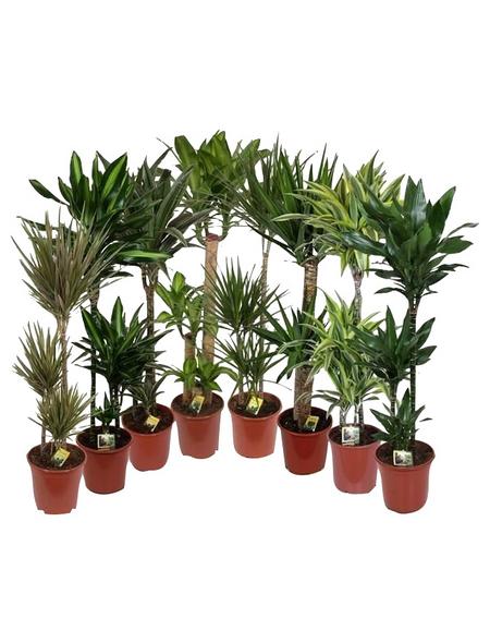 Gruenpflanzen, Gruenpflanzen Mix »in Sorten«,