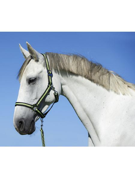 Covalliero Halfter »Hippo«, passend für Pony, Gr. 1, anthrazit/hellgrün