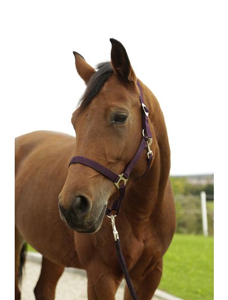 Covalliero Halfter »Hippo«, passend für Pony, Gr. 1, aubergine