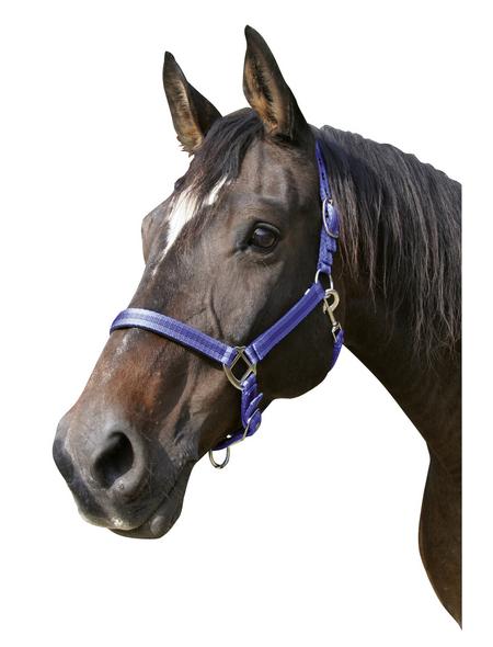 Covalliero Halfter »Mustang«, passend für , Gr. 1, royalblau/schwarz