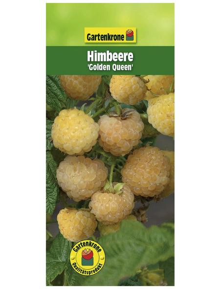 GARTENKRONE Himbeere Rubus idaeus »Golden Queen«