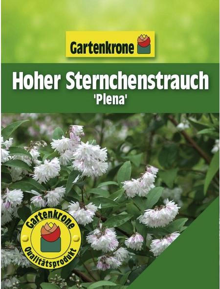 GARTENKRONE Hoher Sternchenstrauch, Deutzia scabra »Plena«, weiß, winterhart