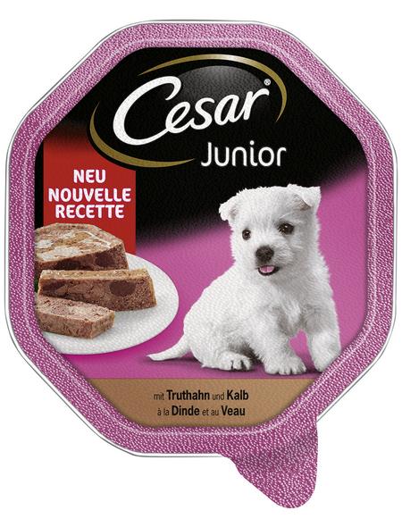 CESAR Hunde-Nassfutter »Junior«, Truthahn/Kalb, 1x Cesar Junior Truthahn mit Kalb