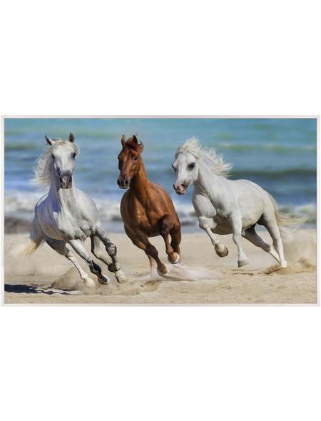 Papermoon Infrarotheizung »EcoHeat - Pferde«, Matt