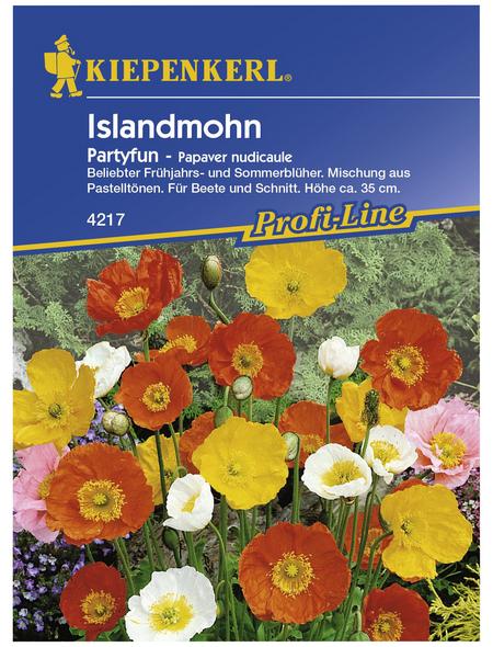 KIEPENKERL Islandmohn, Papaver nudicaule, Samen, Blüte: mehrfarbig