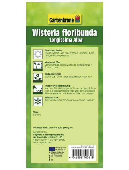 GARTENKRONE Japanischer Blauregen, Wisteria floribunda »Longissima Alba«, weiß, winterhart