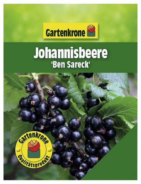 GARTENKRONE Johannisbeere, Ribes nigrum »Ben Sarek« Blüten: weiß, Früchte: schwarz, essbar