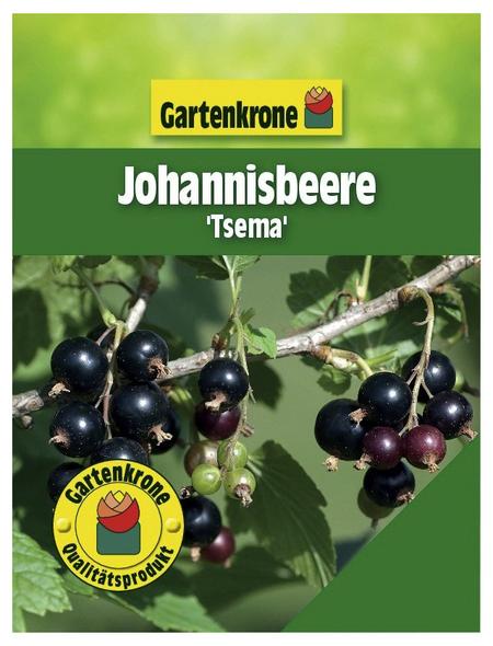 GARTENKRONE Johannisbeere, Ribes rubrum »Tsema« Blüten: weiß, Früchte: rot, essbar