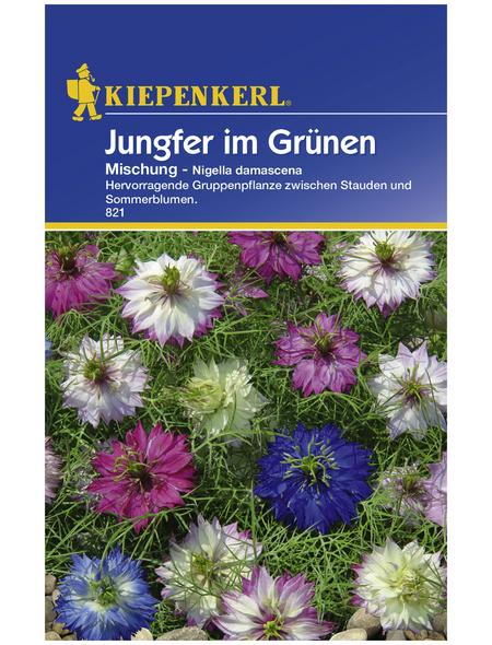 KIEPENKERL Jungfer im Grünen, Nigella damascena, Samen, Blüte: mehrfarbig