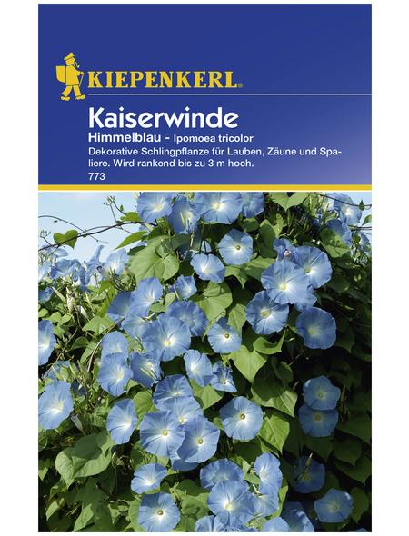 KIEPENKERL Kaiserwinde, Ipomoea tricolor, Samen, Blüte: blau