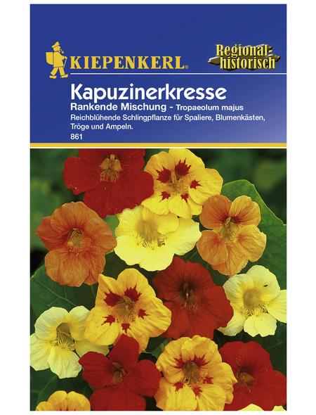 KIEPENKERL Kapuzinerkresse, Tropaeolum majus, Samen, Blüte: mehrfarbig