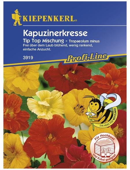 KIEPENKERL Kapuzinerkresse, Tropaeolum minus, Samen, Blüte: mehrfarbig