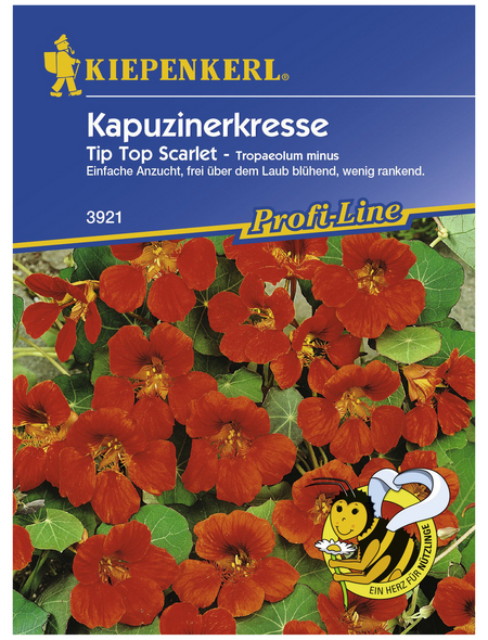 KIEPENKERL Kapuzinerkresse, Tropaeolum minus, Samen, Blüte: rot