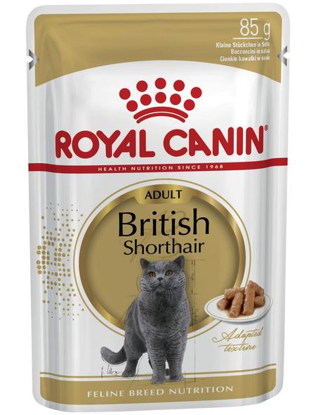 ROYAL CANIN Katzen-Nassfutter, 1 x FBN British Shorthair
