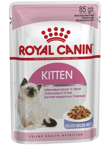 ROYAL CANIN Katzen-Nassfutter, 1 x FHN Pouch Kitten Instinctive in Gelee