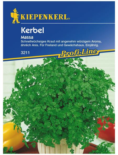 KIEPENKERL Kerbel Anthriscus cerefolium var. cerefolium »Massa«