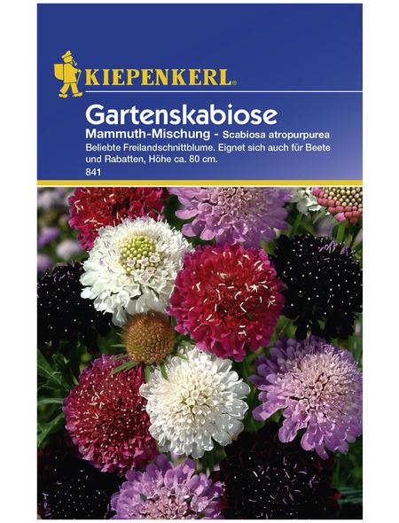KIEPENKERL Kiepenkerl Blumenmischung Last Minute