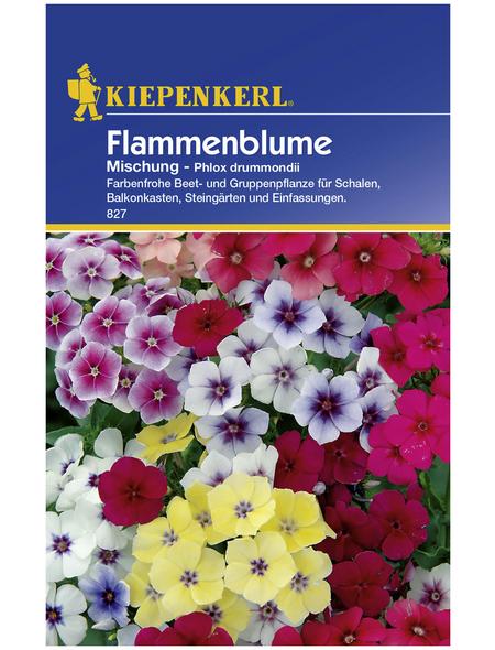 KIEPENKERL Kiepenkerl Blumenmix