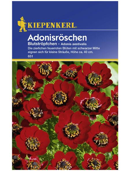 KIEPENKERL Kiepenkerl Saatgut, Adonisröschen, Adonis Adonisröschen, Einjährig