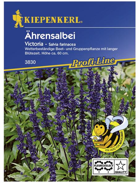 KIEPENKERL Kiepenkerl Saatgut, Ährensalbei, Salvia Farinacea Ährensalbei, Einjährig