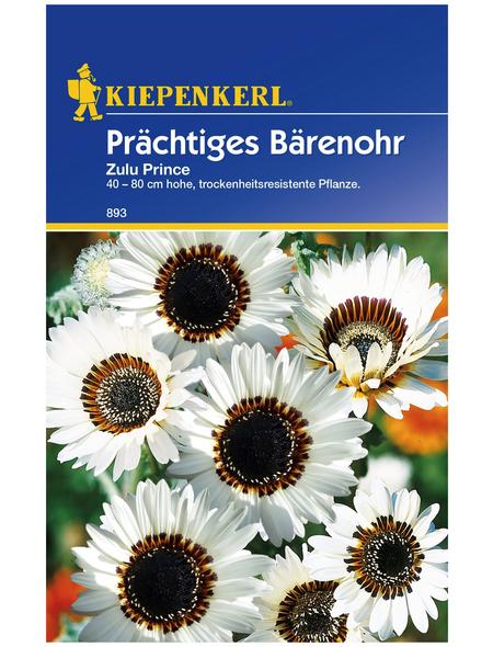 KIEPENKERL Kiepenkerl Saatgut, Bärenohr, Prächtiges Bärenohr Zulu Prince, Einjährig