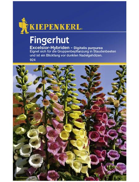 KIEPENKERL Kiepenkerl Saatgut, Fingerhut, Digitalis Fingerhut Excelsior-Hybriden, Zweijährig