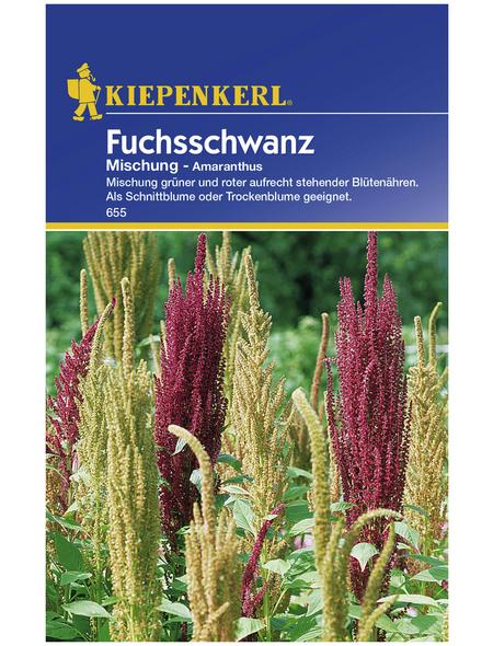 KIEPENKERL Kiepenkerl Saatgut, Fuchsschwanz, Amaranthus Fuchsschwanz, Einjährig