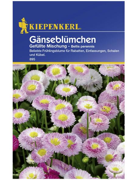 KIEPENKERL Kiepenkerl Saatgut, Gänseblümchen, Bellis perennis Gänseblümchen, Zweijährig