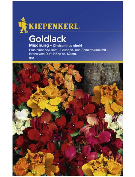 KIEPENKERL Kiepenkerl Saatgut, Goldlack, Cheiranthus Goldlack, Zweijährig