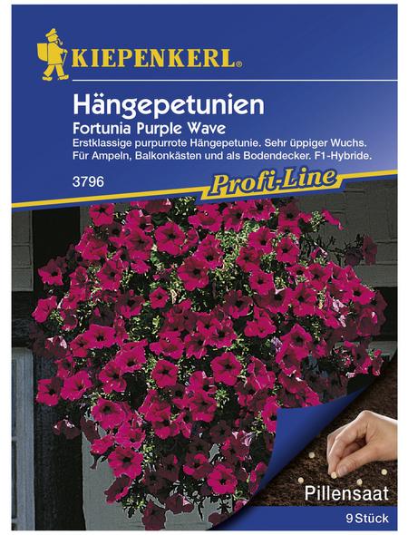 KIEPENKERL Kiepenkerl Saatgut, Hängepetunie, Petunia Hybriden Fortunia Purple Wave F1, Einjährig
