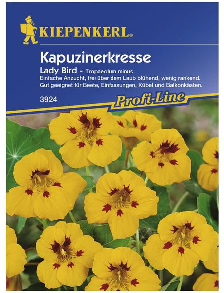 KIEPENKERL Kiepenkerl Saatgut, Kapuzinerkresse, Tropaeolum minus Ladybird, Einjährig