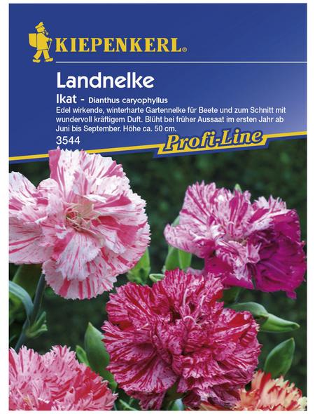 KIEPENKERL Kiepenkerl Saatgut, Landnelke, Dianthus caryophyllus Ikat, Mehrjährig