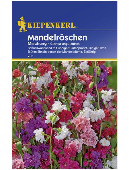 KIEPENKERL Kiepenkerl Saatgut, Mandelröschen, Clarkia Unguiculata, Einjährig