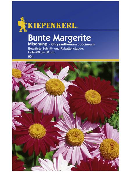 KIEPENKERL Kiepenkerl Saatgut, Margerite, Chrysanthemum Margerite, Mehrjährig