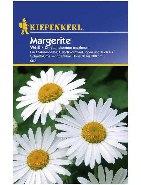 KIEPENKERL Kiepenkerl Saatgut, Margerite, Chrysanthemum, Mehrjährig
