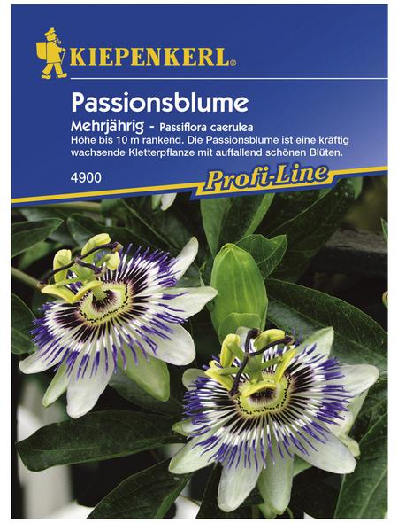KIEPENKERL Kiepenkerl Saatgut, Passionsblume, Passiflora caerulea Passionsblume, Mehrjährig