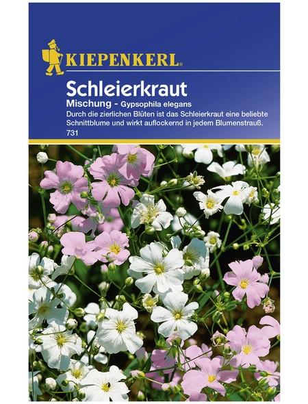 KIEPENKERL Kiepenkerl Saatgut, Schleierkraut, Gypsophila Schleierkraut, Einjährig